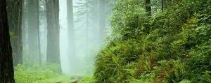 Bosques Concepción