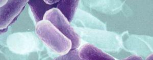 Bacteria Alemania