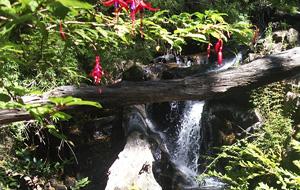 Reserva Nacional Nonguén