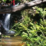 Parque Nacional Nonguén