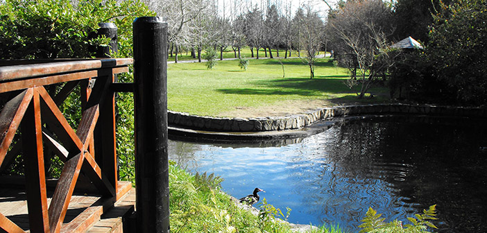 Laguna Pequeña del Parque
